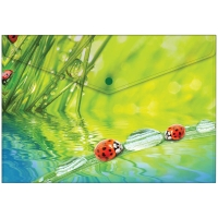 """Папка-конверт на кнопке А4, """"Ladybird"""", 180мкм"""